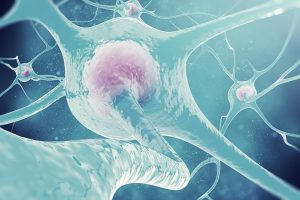 What Are Estrogen And Phytoestrogen?