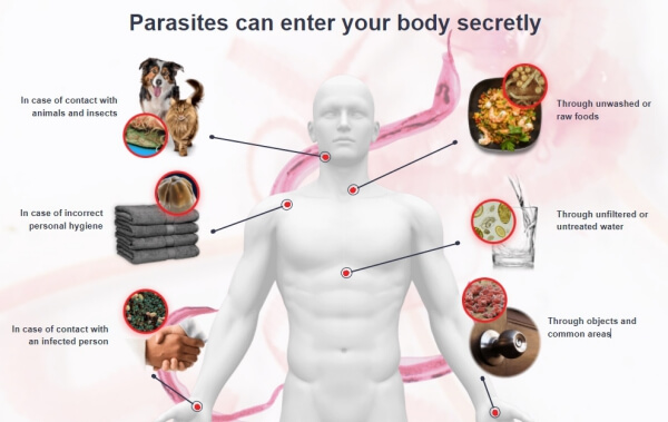 worms and parasites